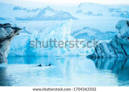Men swimming in the water of Glacier lagoon. Man wearing dry suit. Icebergs drifting in the lagoon. Cold temperatures for ice swimming. Calm surface of the water. Climate change. Global warming. #1704363502