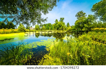 Summer green rural pond water. Summer rural pond. Rural pond water. Green rural pond view #1704398272