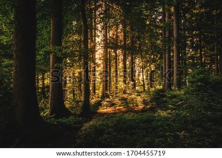 Wild life photography sunlight moon draks #1704455719