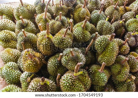 Popular fruit Durian, king of fruit for sale at the stall in Prachuap Khiri Khan, Thailand. #1704549193