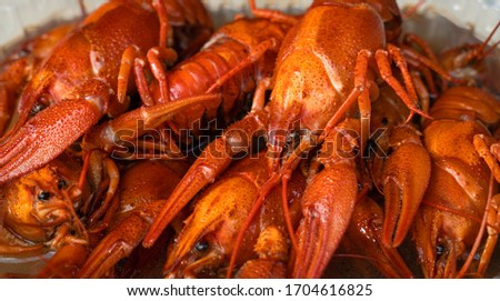 boiled crayfish on an iron plate. boiled red crayfish background for menu. top view, close up photo. a plate of cooked crayfish. Boiled crayfish, a traditional Russian dish. Krasnodar region #1704616825