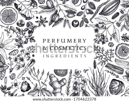 Hand drawn perfumery and cosmetics ingredients banner. Decorative background with vintage aromatic plants, fruits, spices, herbs for perfumery. Organic cosmetics design template. Aromatic plants flyer #1704622378