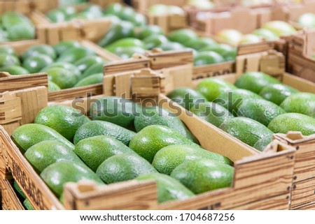 Fresh raw organic uncooked avocado tropical fruit in box for sale at market. Vegan food and healthy nutrition concept. Stock photo green avocado on market background.