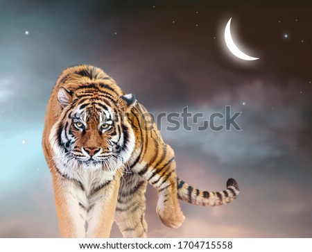 Fantasy tiger walking forward on fabulous magical night sky background with glowing crescent moon, shining stars and clouds, fairy tale space heaven, fantastic artistic picture with majestic animal