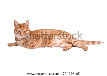 Sleeping red cat on white background. #1704949105