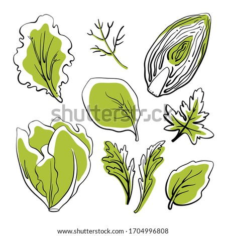 Salad leaves and herbs: lettuce, chicory, swiss chard, arugula, dill, parsley. Colorful line sketch collection of vegetables and herbs isolated on white background. Doodle hand drawn vegetable icons.  #1704996808