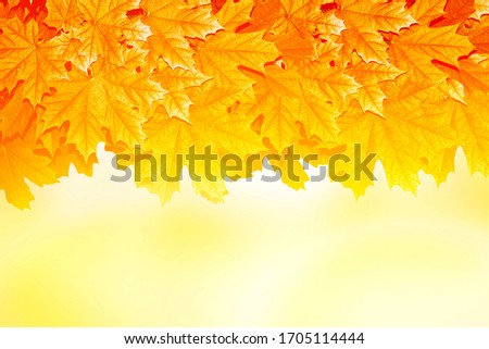 autumn landscape with bright colorful leaves. Indian summer. nature