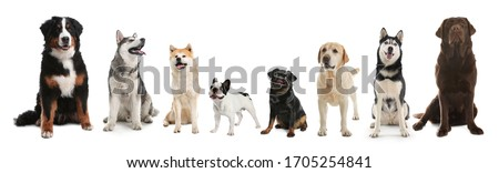 Collage with different dogs on white background. Banner design Royalty-Free Stock Photo #1705254841