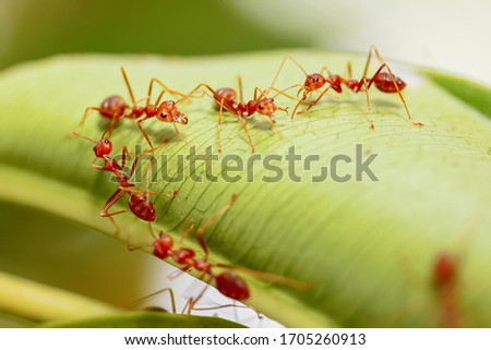 Close-Up Of Fire Ants On Leaf