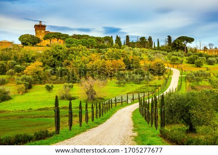 Winding dirt road rises to the farm. Olive trees on green grassy meadows. Rural tourism. Cozy picturesque farms in the hills of Tuscany. The concept of active, rural and photo tourism #1705277677