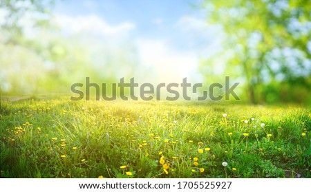 Beautiful meadow field with fresh grass and yellow dandelion flowers in nature against a blurry blue sky with clouds. Summer spring perfect natural landscape. #1705525927