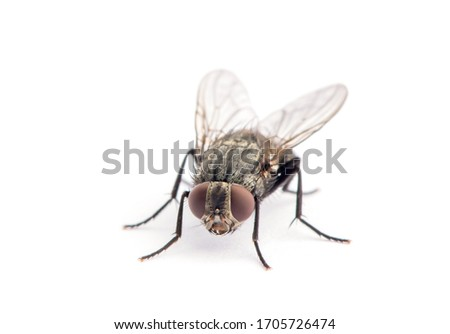 fly isolated on a white Royalty-Free Stock Photo #1705726474