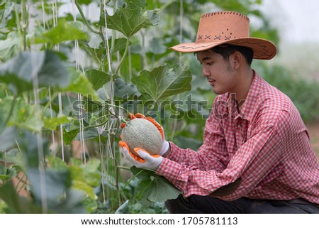 Melons in the garden, Yong man holding melon in greenhouse melon farm. Young sprout of Japanese melons growing in the greenhouse. #1705781113