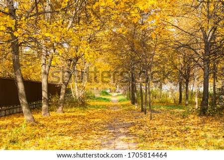 View of the alley in autumn, Krasnogo Mayaka street, Central Chertanovo, Moscow, Russia