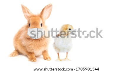 Easter Bunny and chicken wearing face masks . Easter greeting card. Coronavirus alert for 2020.