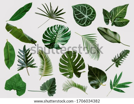 More beautiful exotic tropical leaves, isolated leaf background #1706034382