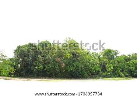 Treeline isolated on a white background. #1706057734