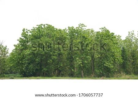Treeline isolated on a white background. #1706057737