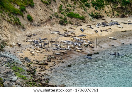 A group of elephant seals on the shores of California