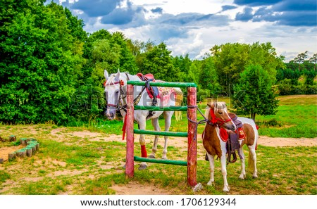 Horse and pony at fence #1706129344