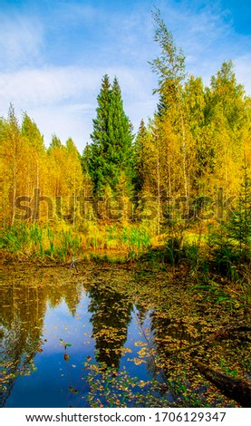 Autumn forest pond trees view. Autumn forest pond. Pond in autumn forest. Autumn pond water