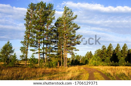 Rural nature field road trees landscape. Rural country road view. Road to forest. Rural nature field road #1706129371