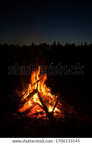 Campfire in the forest at night  #1706133145