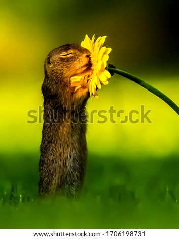 Squirrel smelling the flower beautiful image in wildlife
