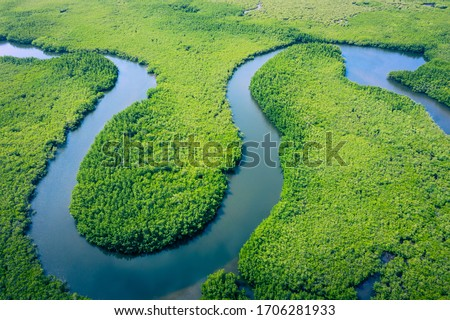 Aerial view of Amazon rainforest in Brazil, South America. Green forest. Bird's-eye view.  Royalty-Free Stock Photo #1706281933