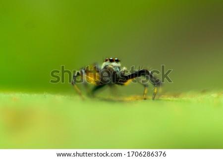Macro Shot of a jumbing spider #1706286376