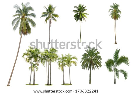 Coconut and palm trees Isolated tree on white background , The collection of trees.Large trees are growing in summer, making the trunk big. #1706322241