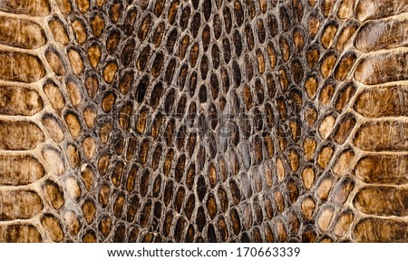 Snake skin surface texture close up for background and wallpaper