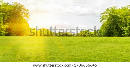 Panorama and tropical garden and green grass, the sun shines. #1706656645