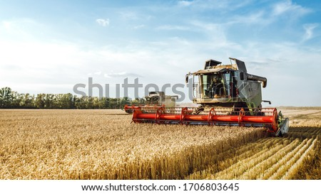 Combine harvester harvests ripe wheat. Ripe ears of gold field on the sunset cloudy orange sky background. . Concept of a rich harvest. Agriculture image. #1706803645