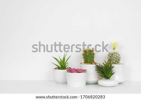 Group of various indoor cacti and succulent plants in pots. Side view on white shelf against a white wall. #1706820283