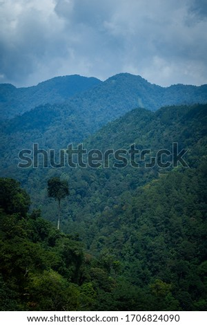 picture of rain forest in island of java