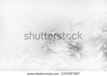 Artistic white leaves tree black and white - background concept #1707097087