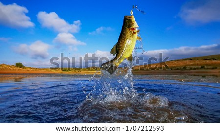 Big Bass Large mouth - Fishing on lake with blue sky at dawn, sunrise Royalty-Free Stock Photo #1707212593