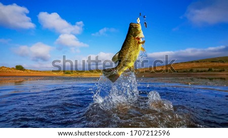 Big Bass Large mouth - Fishing on lake with blue sky at dawn, sunrise Royalty-Free Stock Photo #1707212596