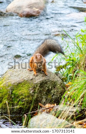 Squirrel on the ground. Protein in the natural environment. View of squirrel nature. Portrait of a squirrel. Squirrel funny