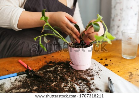 Caucasian girl child in an apron at the table replants plant sprouts in pots with soil, care and care of plants, plant parents, tools #1707318211