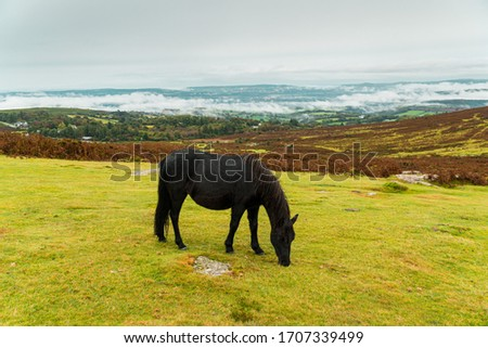 Black horse eating grass with scenry view landscape. #1707339499