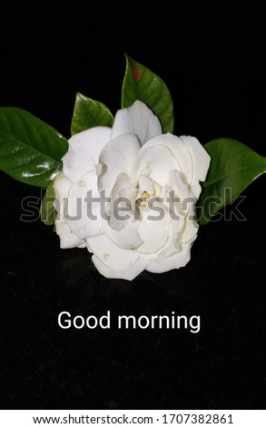 Good morning message card. Text on flowers' image.