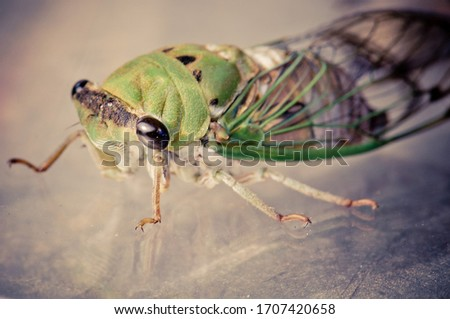 Picture of a cicada up close