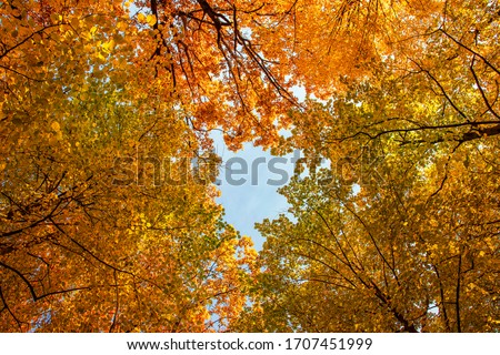 On a bright autumn day, beautiful yellow-orange trees formed a tent over their heads #1707451999