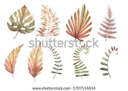 Watercolor set of tropical plants. Pastel colors. Hnad painted illustration. Clipart. Isolated element. Modern exotic plants. Tropical flowers. best for prints, invitations, DIY