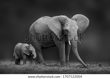 African elephant mother and son Royalty-Free Stock Photo #1707522004