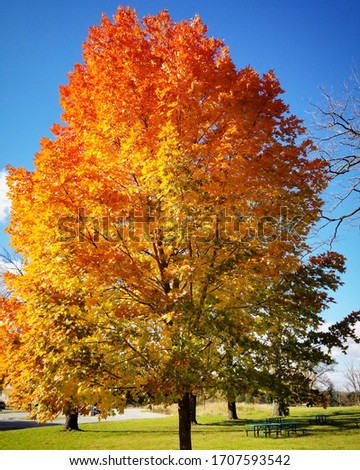 Colorful Leaves in Autumn Fall #1707593542