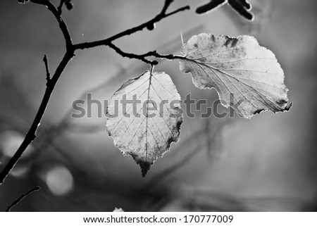 Leaves in autumn, forest 2, black and white #170777009