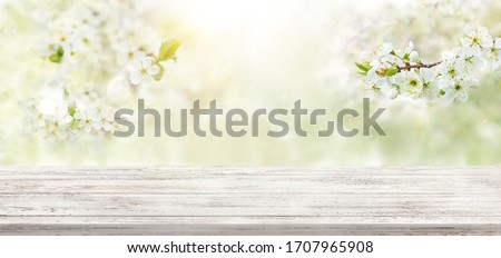 Spring background with white blossoms and white wooden table. Spring apple garden on the background